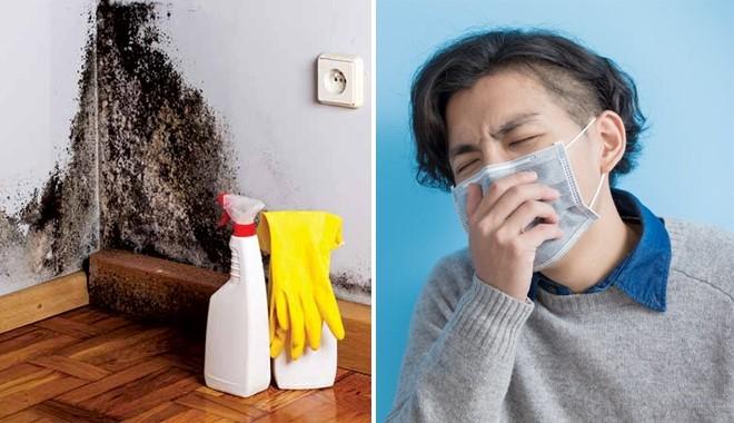 rêu mốc ảnh hưởng đến sức khỏe con ngườ